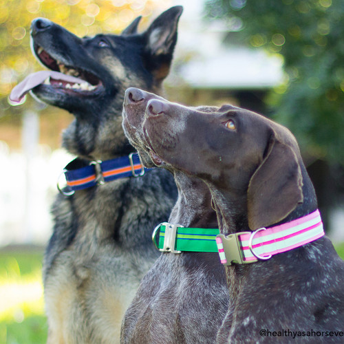 Striped Comfort Dog Collar