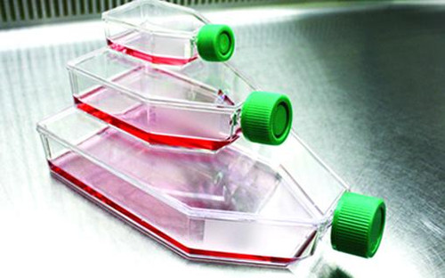 SPL Tissue Culture Flask with Filter Cap 70025