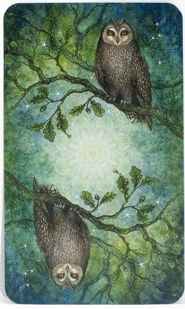Forest Of Enchantment Tarot
