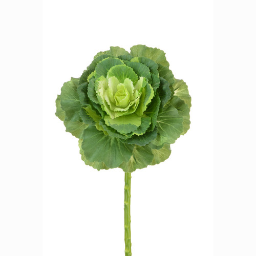 Brassica Ornamental Cabbage Stem 46cm Green