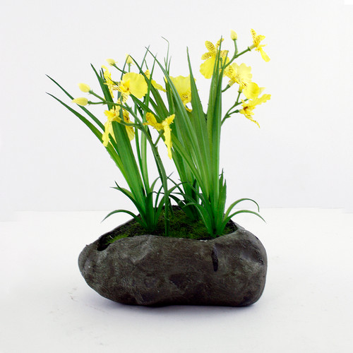 Dancing Lady Orchid in Stone Yellow 22cm