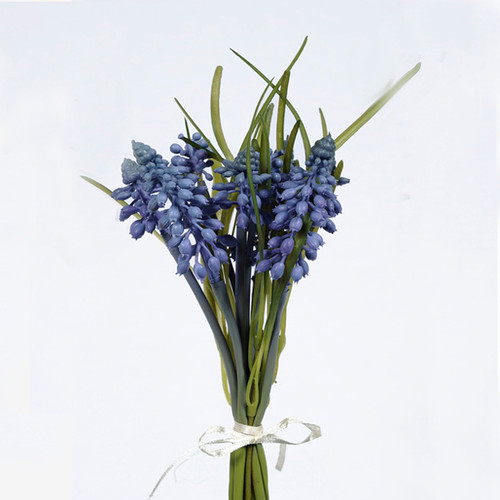 Muscari or Grape Hyacinth Bundle Blue 25cm