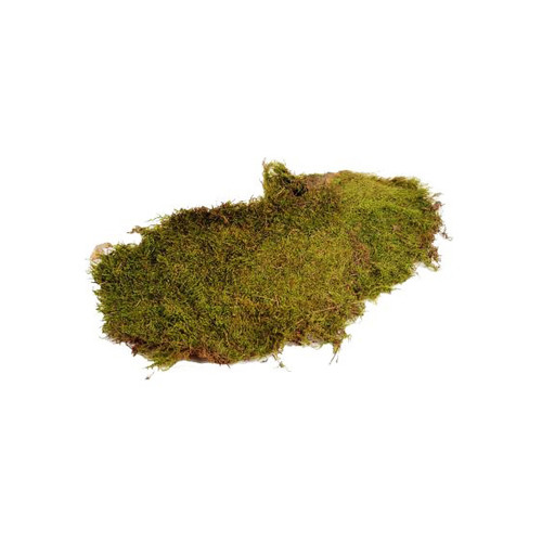 Flat Dried Preserved Natural Moss 500g Box