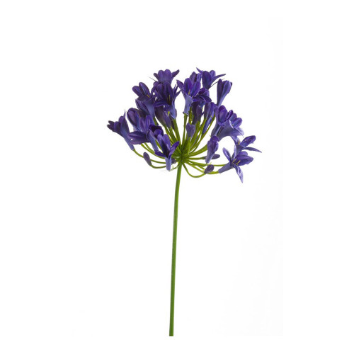 Agapanthus Artificial Single Flower Stem 75cm Blue