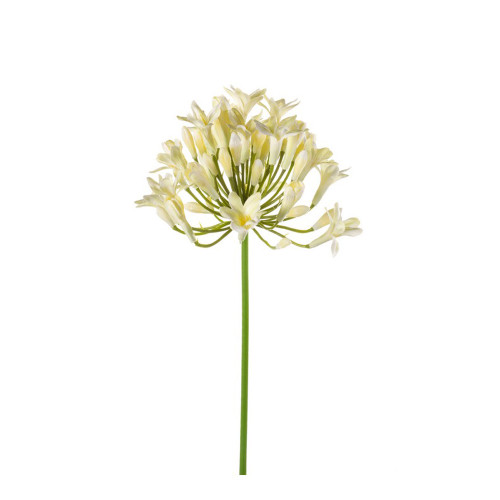 Agapanthus Artificial Single Flower Stem 75cm Cream