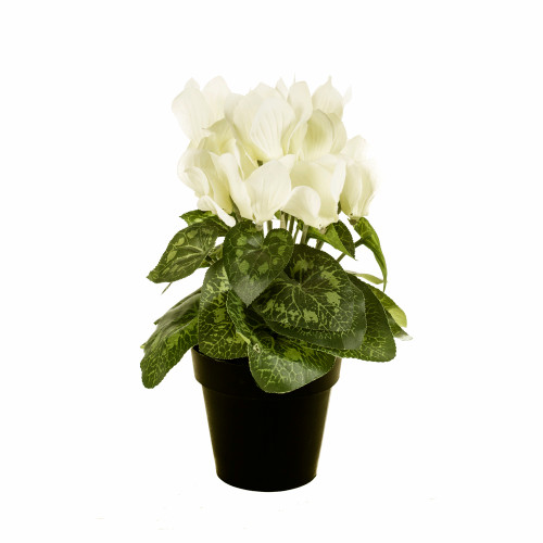 Faux Silk White Cyclamen Bush in Pot
