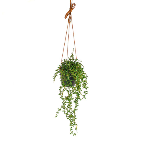 Artificial Hanging String Of Pearl Succulent 40cm/15.75 Inches