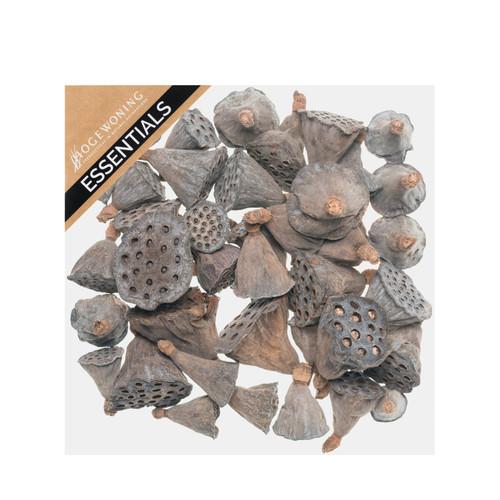 75g Box of Approximately 20 Mini Lotus Heads
