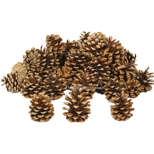 Pine Cones 5-8cm 10kg  (x 600) Dried Natural