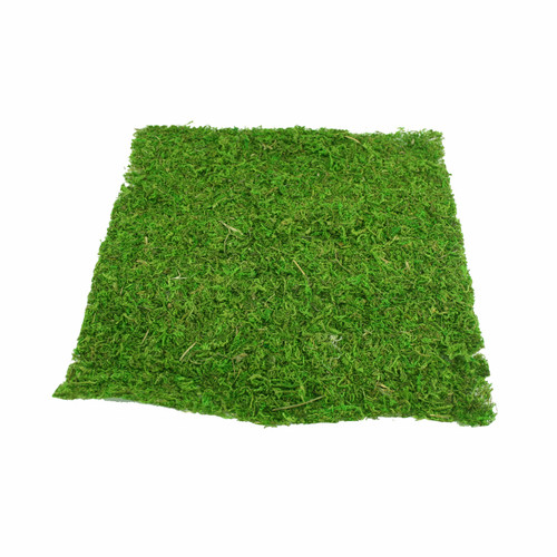 Natural Green Preserved Moss Sheet 38cm/15 Inches Square