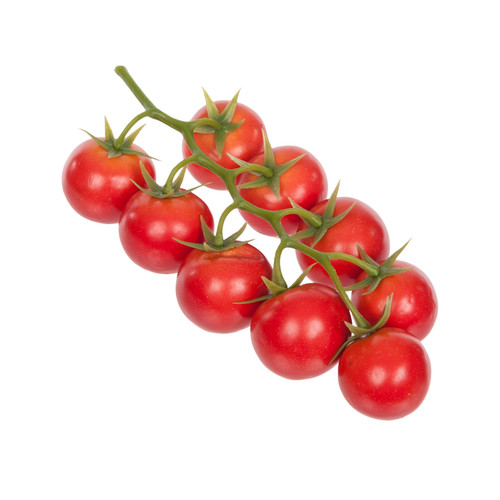 Cherry Tomato 9 Red Fruits on the Vine 21cm
