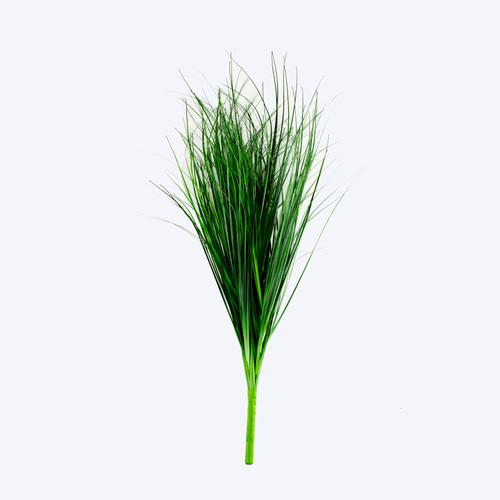 Bear Grass Bush 60cm