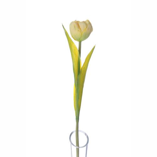 Tulip Single Spring Flower Lemon 43cm/17 Inches