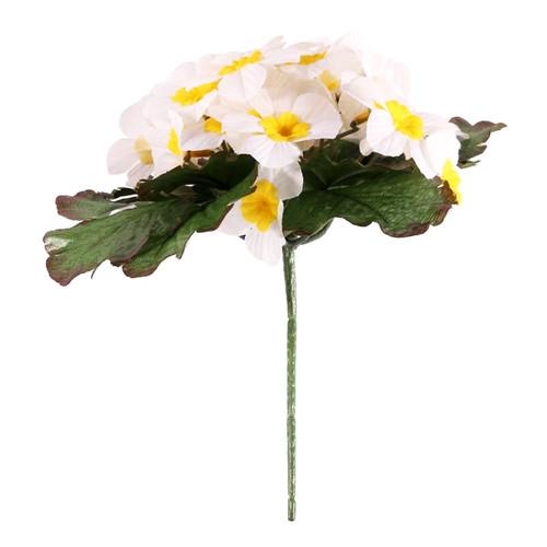 Primula Bush 25 Flowers 21cm/8 Inches Cream
