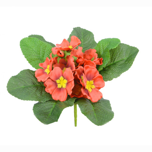 Primula Bunch Red 20cm