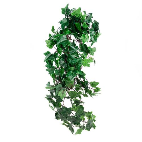 Ivy Plant Trailing Medium Leaf 80cm Green