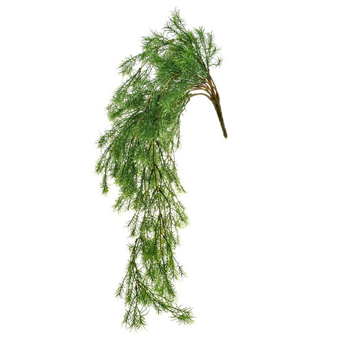 Springeri Asparagus Fern Trailing 61cm