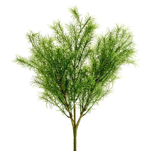 Springeri Asparagus Fern Bush 35cm/13.5 Inches