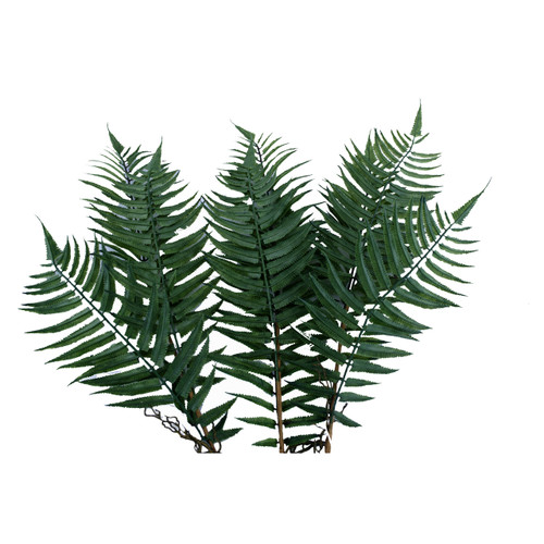 Sword Fern Spray With Roots Green x 3 Stems 75cm