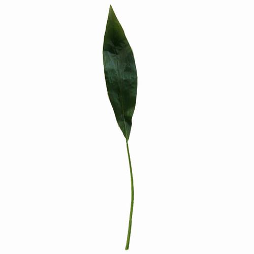 Single Aspidistra Leaves x 6