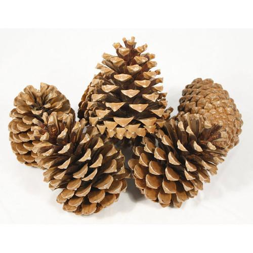 Pine Cones Large x 10