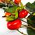 Artificial Orange Rosehip Fruit With Foliage Spray Detail