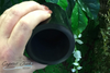 Shungite cup, purifies water, EMF protector.
