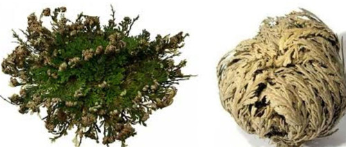 Rose of Jericho-WOW! The plant that really never dies! If opened in a new home absorbs any negativity. You can also use the water to sprinkle the doorways for a blessed prosperous home. These are actually passed down generations. They can be dried out, then used over and over! The Flower that is everlasting, never dies. Amazing! Start a Tradition with your family or friends!