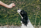 Your guide to essential oil for dogs