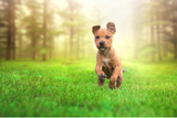 Is Vegan Dog Food a realistic option