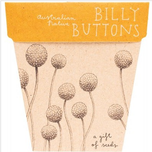 Sow 'N Sow Gift Of Seeds Billy Buttons 1