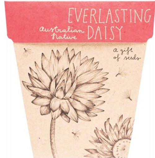 Sow 'N Sow Gift Of Seeds Everlasting Daisy 1