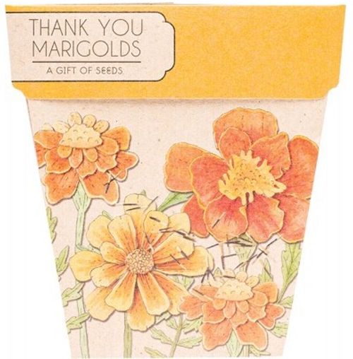 Sow 'N Sow Gift Of Seeds Thank You Marigolds 1