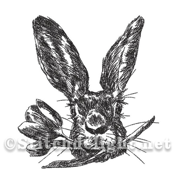 SD1394 Pencil Sketch Peter Rabbit