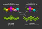 What Is Broad-Spectrum CBD