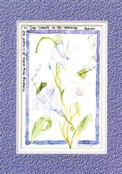 KJV Scripture Sympathy Card - Purple Morning Glories