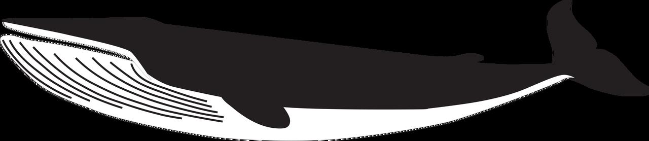 Humpback Whale SVG Cut File
