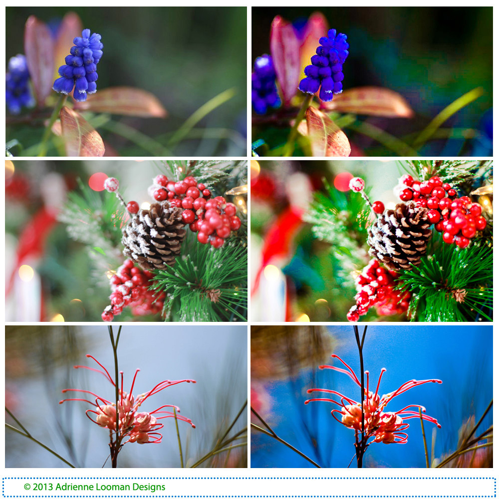 Lightroom Preset fascinating flowers