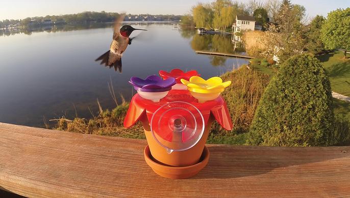 A hummingbird visiting the ZUMMR Hummingbird Starter Kit.