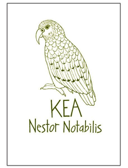 NZ made 100% cotton tea towel with an iconic kea design from Moa Revival.