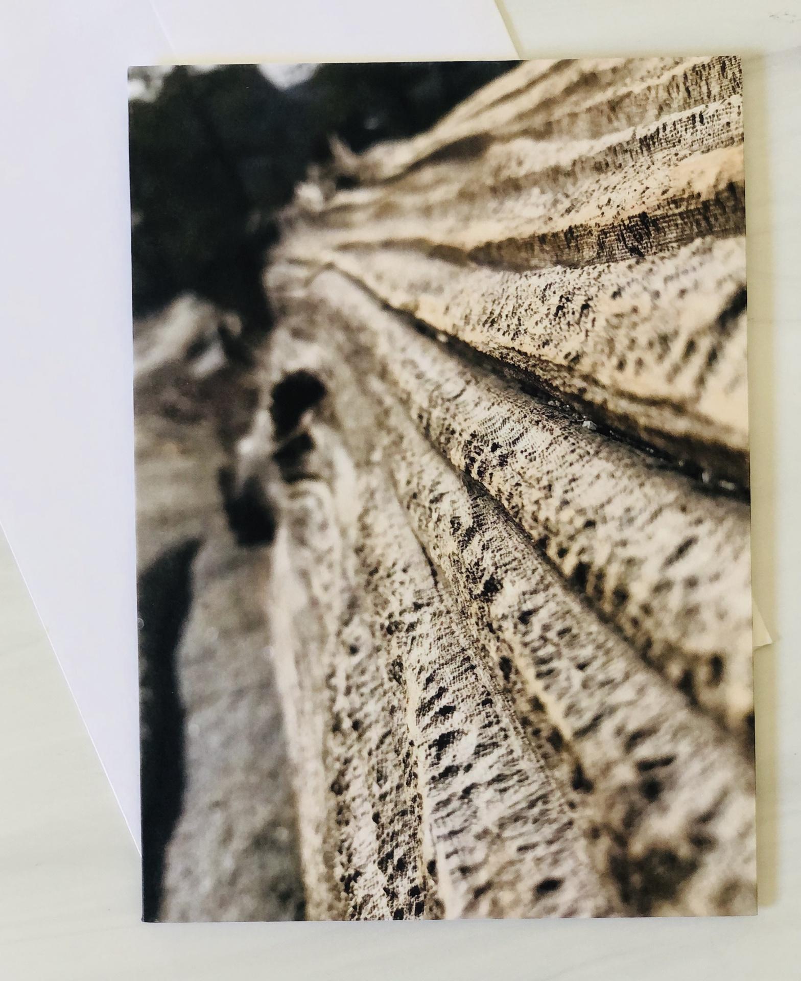 Sierra Photo Series Blank Greeting Cards--CHOOSE DESIGN
