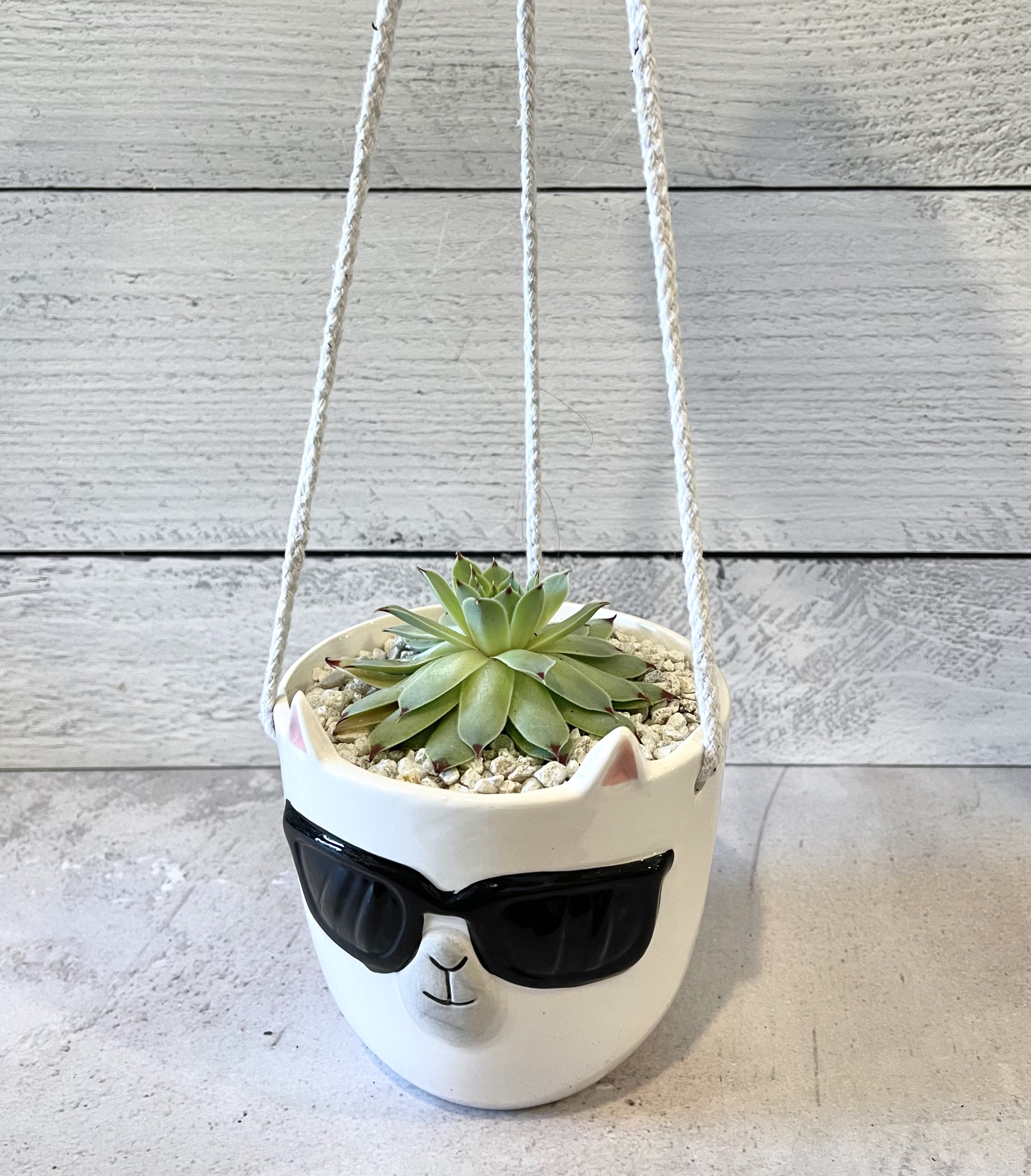 Hanging Llama Planter--CHOOSE SIZE; FOR STORE PICK UP OR LOCAL DELIVERY ONLY