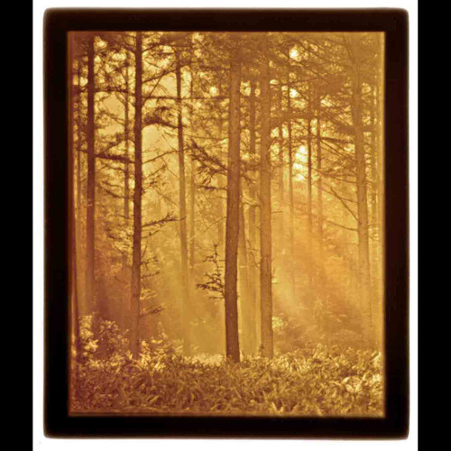 WOODLAND SUNBEAM-U123