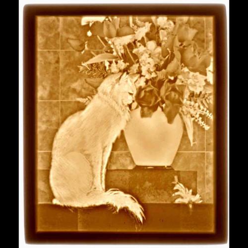 CAT W. FLOWERS-U153