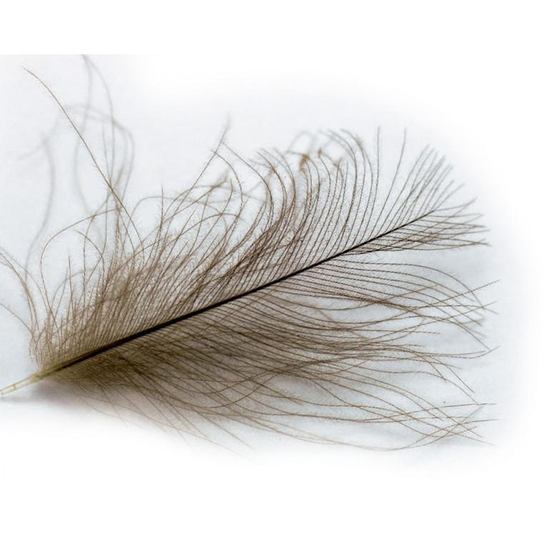 Veniard Cul De Canard super select feathers