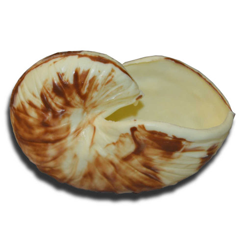 Hollow Chocolate Nautilus