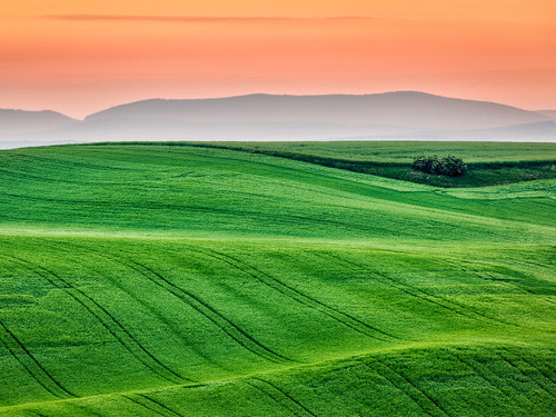 Moravian Fields, Czech Republic