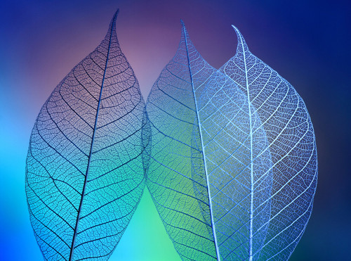 Prismatic Leaves