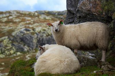 Is Wool Cruelty Free?