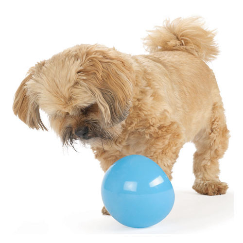 Interactive Dog Toy | Orbee Tuff Snoop